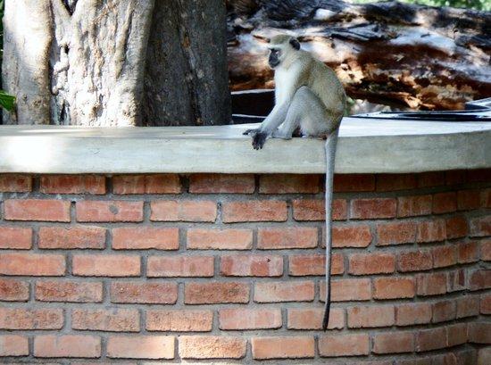 Imbabala Zambezi Safari Lodge: Visitor in the Lodge