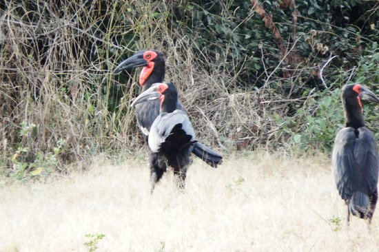 Imbabala Zambezi Safari Lodge : Rare Birds