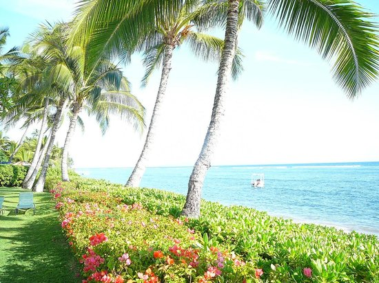 Lahaina Shores Beach Resort : Palm-lined beach