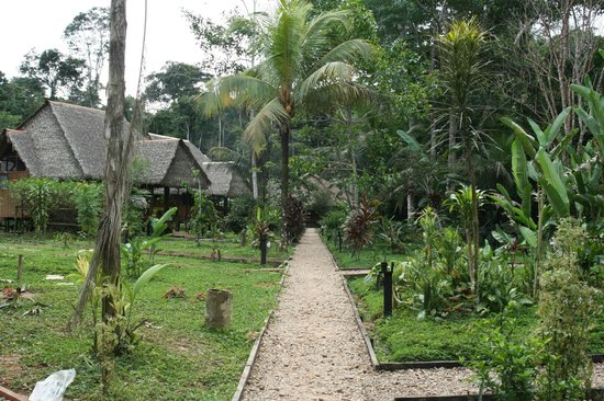 Tambopata Ecolodge: view from bridge out to the huts