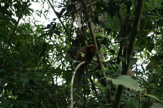 Tambopata Ecolodge: wake up call