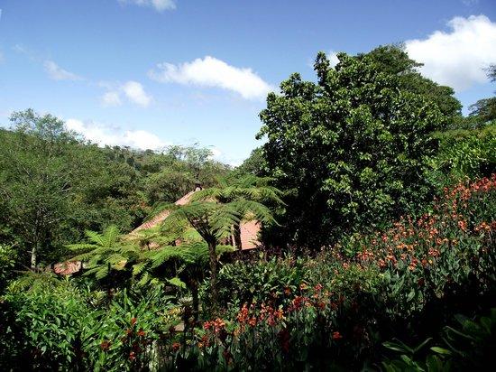 La Paz Waterfall Gardens: c'est vert