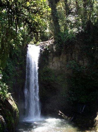 La Paz Waterfall Gardens: cascade la paz