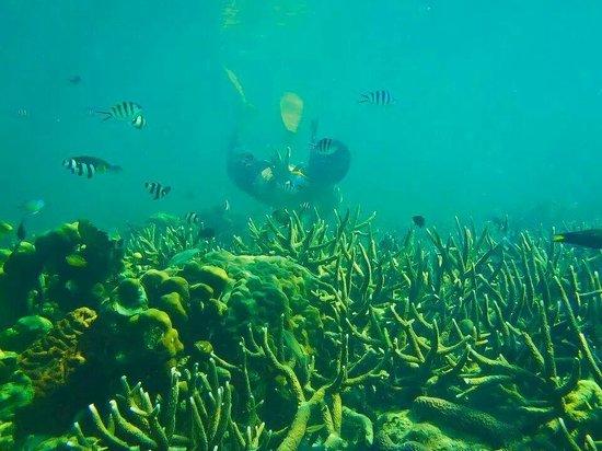 Tunku Abdul Rahman Marine Park: visit manukan!! wonderful island....!!