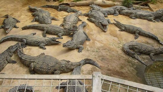 Les Rouvieres : la ferme aux crocodiles