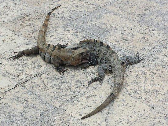 Luxury Bahia Principe Akumal Don Pablo Collection : Lucha Iguanas!