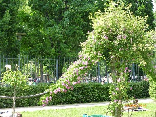 fotos jardins maravilhosos:Jardins Maravilhosos