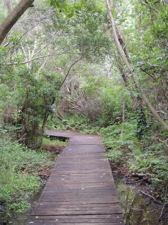 Timucuan Ecological & Historical Preserve: Wooden walkway trail
