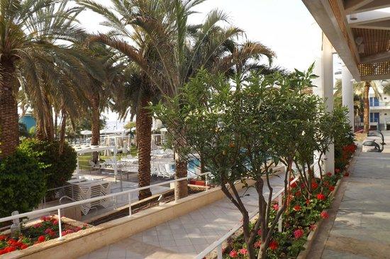 Isrotel Yam Suf Hotel : Дворик