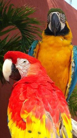 Zoetry Paraiso de La Bonita : Birds