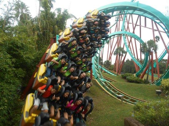 Busch Gardens Train Picture Of Busch Gardens Tampa