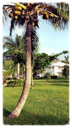 Hotel Riu Palace St Martin : Grounds