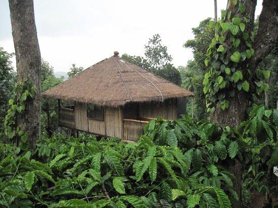 Greenex Farms: The tree-house