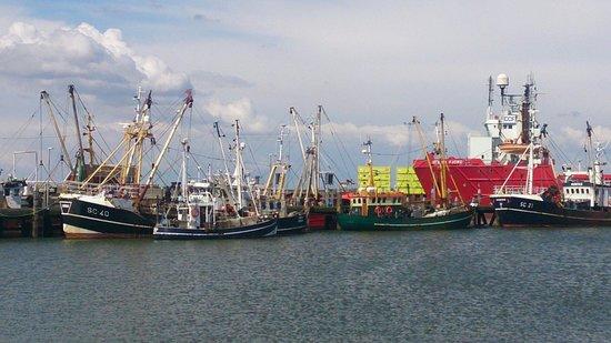 Otto & Ani's Fisk: Blick auf den Hafen