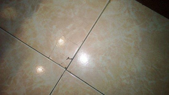 Iberostar Torviscas Playa: Cracked bathroom tile