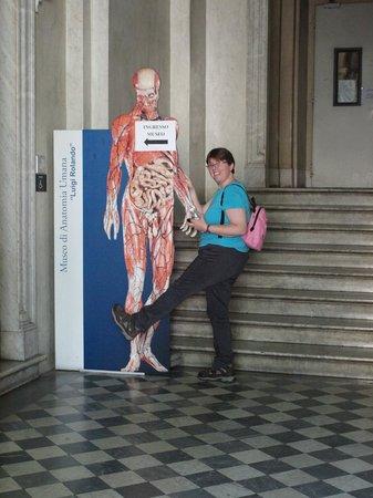 Museo di Anatomia Umana: entrance