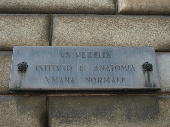 Museo di Anatomia Umana: a very small sign to guide you in