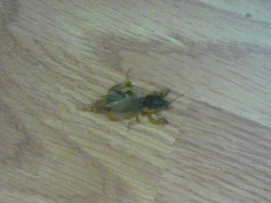 Red Roof Inn Hardeeville : nasty insect (scorpion?)