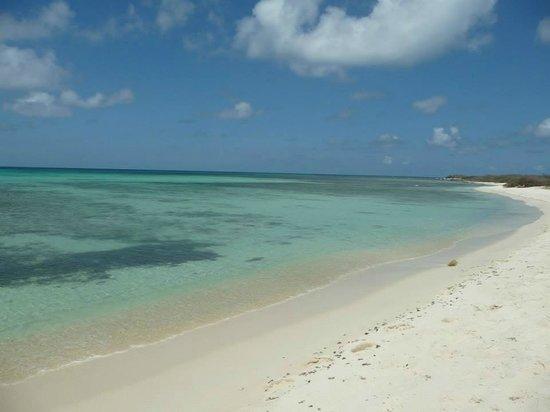 Arashi Beach: Mucho coral y peces para hacer snorkel