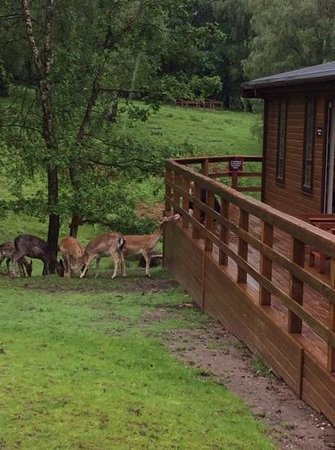 Silver Trees Holiday Park: Stags View Lodge