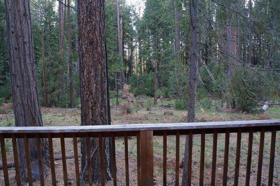 Evergreen Lodge at Yosemite: Aussicht vom Balkon