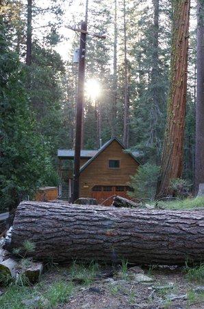 Evergreen Lodge at Yosemite: Hotelgelände