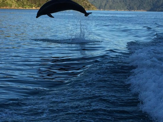 Cougar Line: A dolphin uses the Wake of Cougar One to Jump