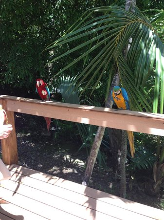 Excellence Punta Cana: parrots on the hotel grounds