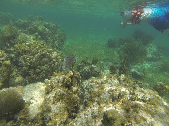 The Original Snorkeling Adventure: Reef