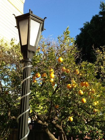 Garden Street Inn: Orange anyone
