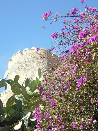 Conjunto Monumental de La Alcazaba: Bougainvillea rund um die Burgmauern