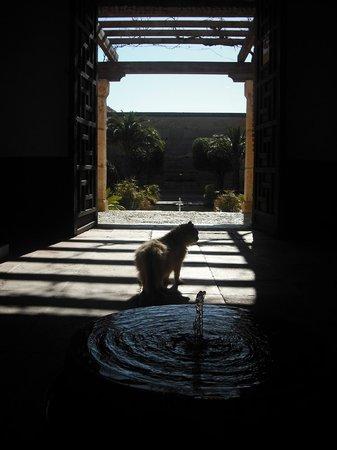 Conjunto Monumental de La Alcazaba: Burgkatze sucht Schatten