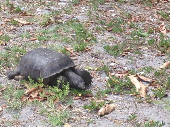 Cabbage Key Inn: Sample of the wildlife