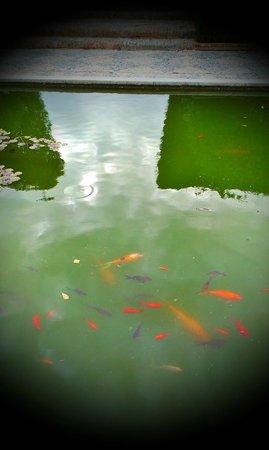 Conjunto Monumental de La Alcazaba: Goldfische im Becken