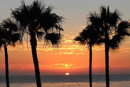 Las Rosas Hotel & Spa : palm trees in the sunset