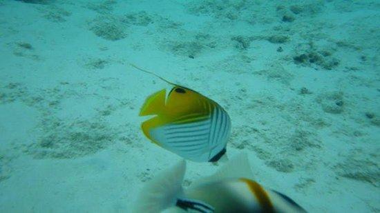 Sunset Resort: Snorkeling is awsome here