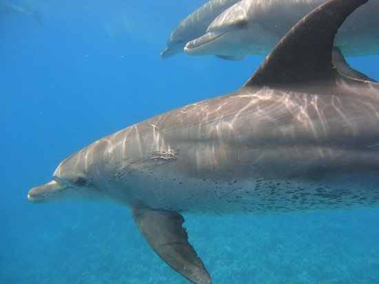 New Son Bijou Diving Center : playful dolphins kept us company for 40 minutes