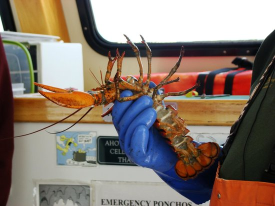 Lulu Lobster Boat: catch of the day