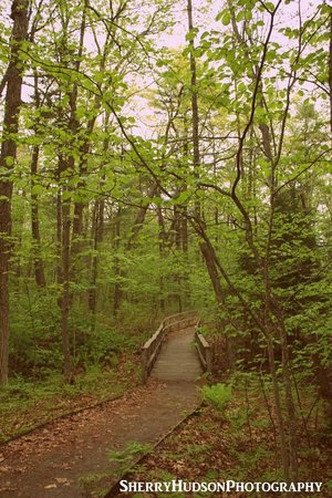Rachel Carson National Wildlife Refuge: Walking the Path