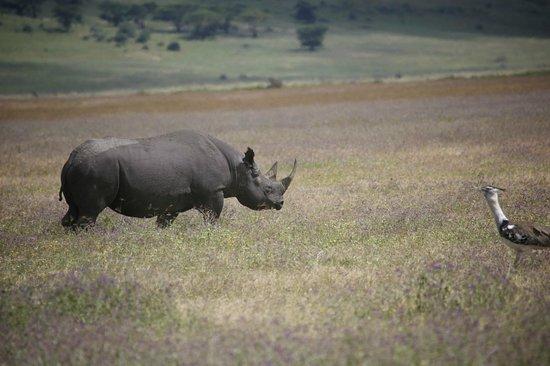 Ngorongoro Sopa Lodge: Rhino