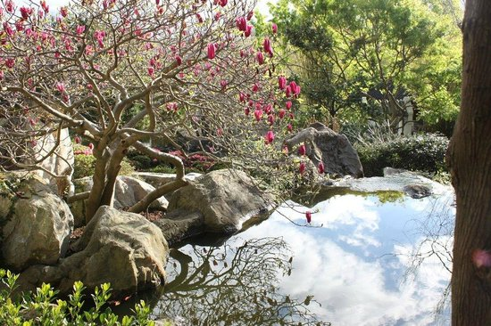 Chinese Garden of Friendship : Beautiful plants and water