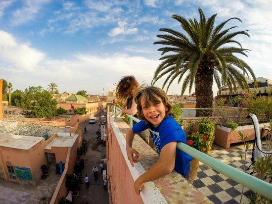 Le Gallia: La terrazza e la palma allampanata