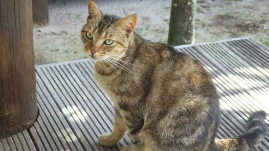 Tamanu Beach: Resident friendly cat