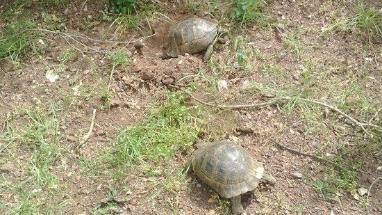 Mersoy Exclusive Aqua Resort : Tortoises the best asset