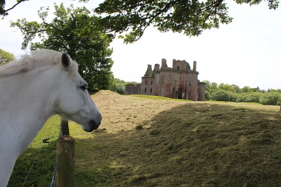 Caerlaverock Castle: My buddy next door :)