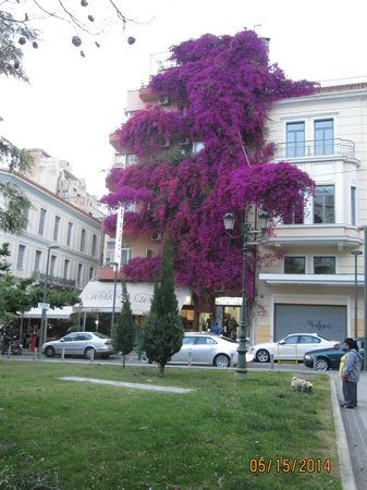 The Athens Gate Hotel: 3-story Bouganvillia 2 blocks from the hotel