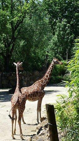Zoo Osnabruck