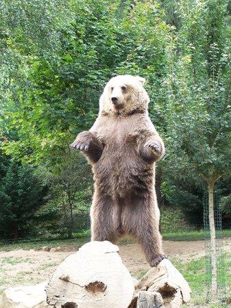 Parc Animalier Des Pyrenees: les ours