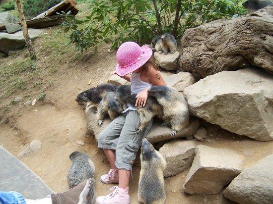 Parc Animalier Des Pyrenees: les marmottes