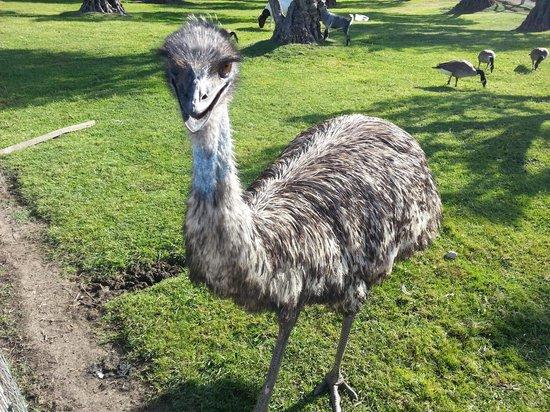 Castello di Amorosa: Birdie